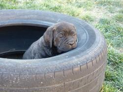 Sleepy Tire