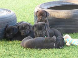 Puppy Pile 1