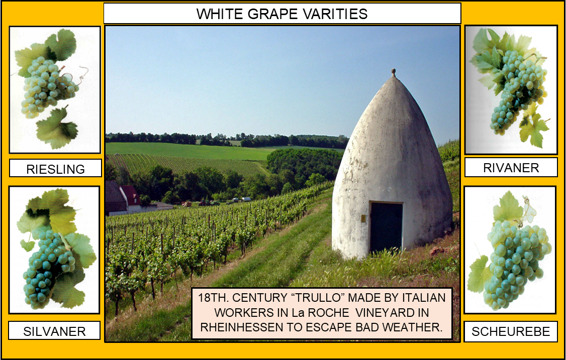 106_WHITE GRAPE VARITIES 1 4-17-20.png