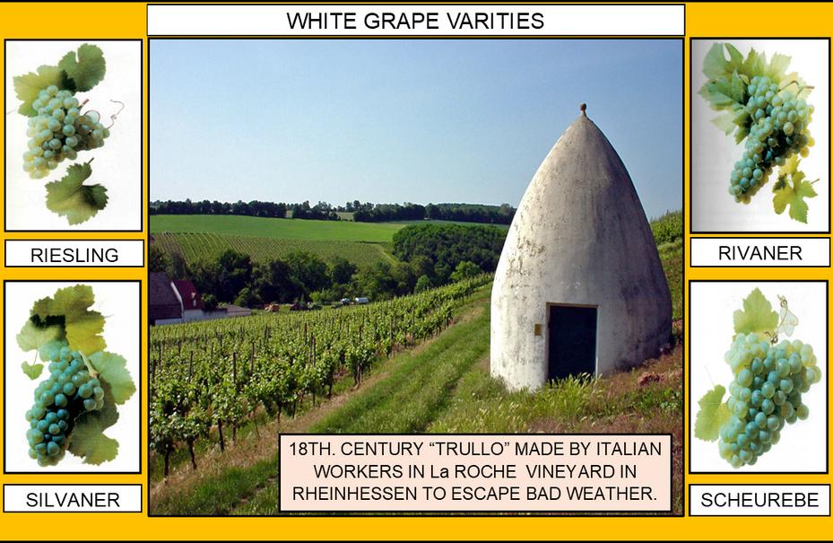106_WHITE GRAPE VARITIES 1 4-17-20.png