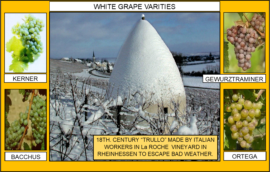 106_WHITE GRAPE VARITIES 2 4-17-20.png
