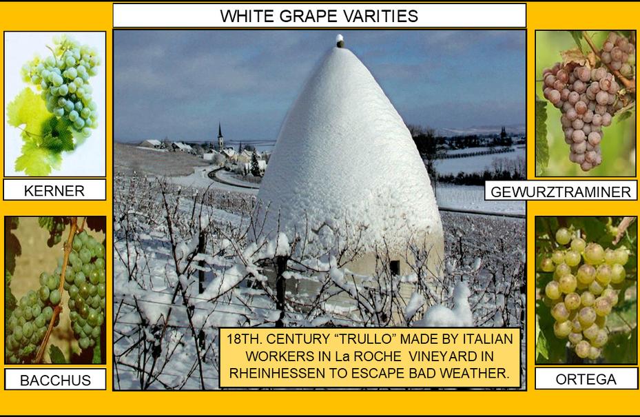 106_WHITE GRAPE VARITIES 2 4-17-20.png