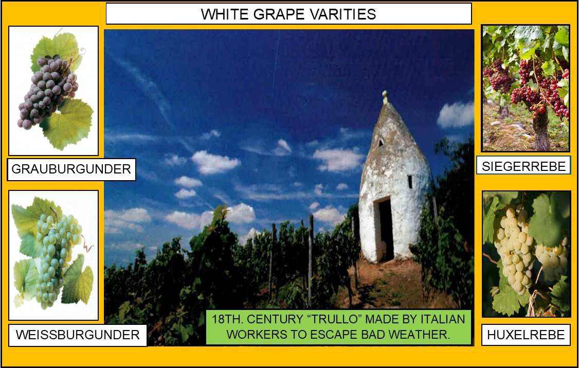 106_WHITE GRAPE VARITIES 3 4-17-20.png
