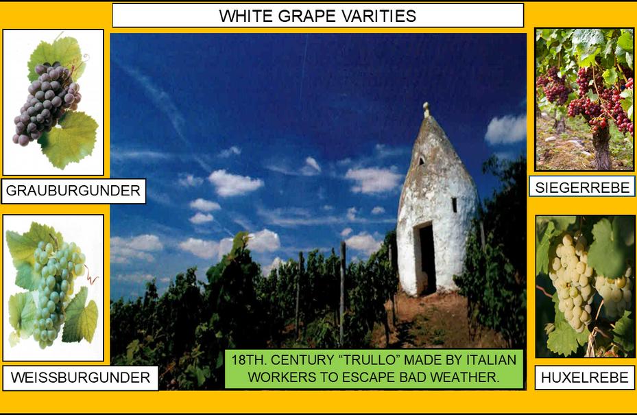 106_WHITE GRAPE VARITIES 3 4-17-20.png