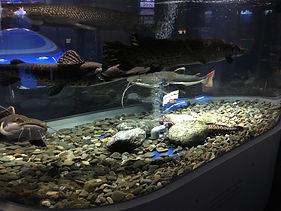 バイオろ過フィルター uniporous ウニポラス ウニ殻ろ過材 サケのふるさと千歳水族館_写真2