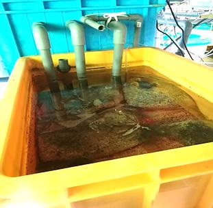 バイオろ過フィルター uniporous ウニポラス ウニ殻ろ過材 さけます・内水面水産試験場_写真3