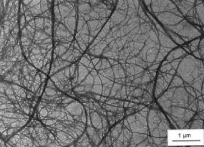 Cellulose microfibrils