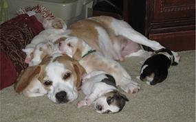 Bob & puppies