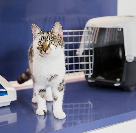 beautiful-cat-with-cage-at-veterinary-cl