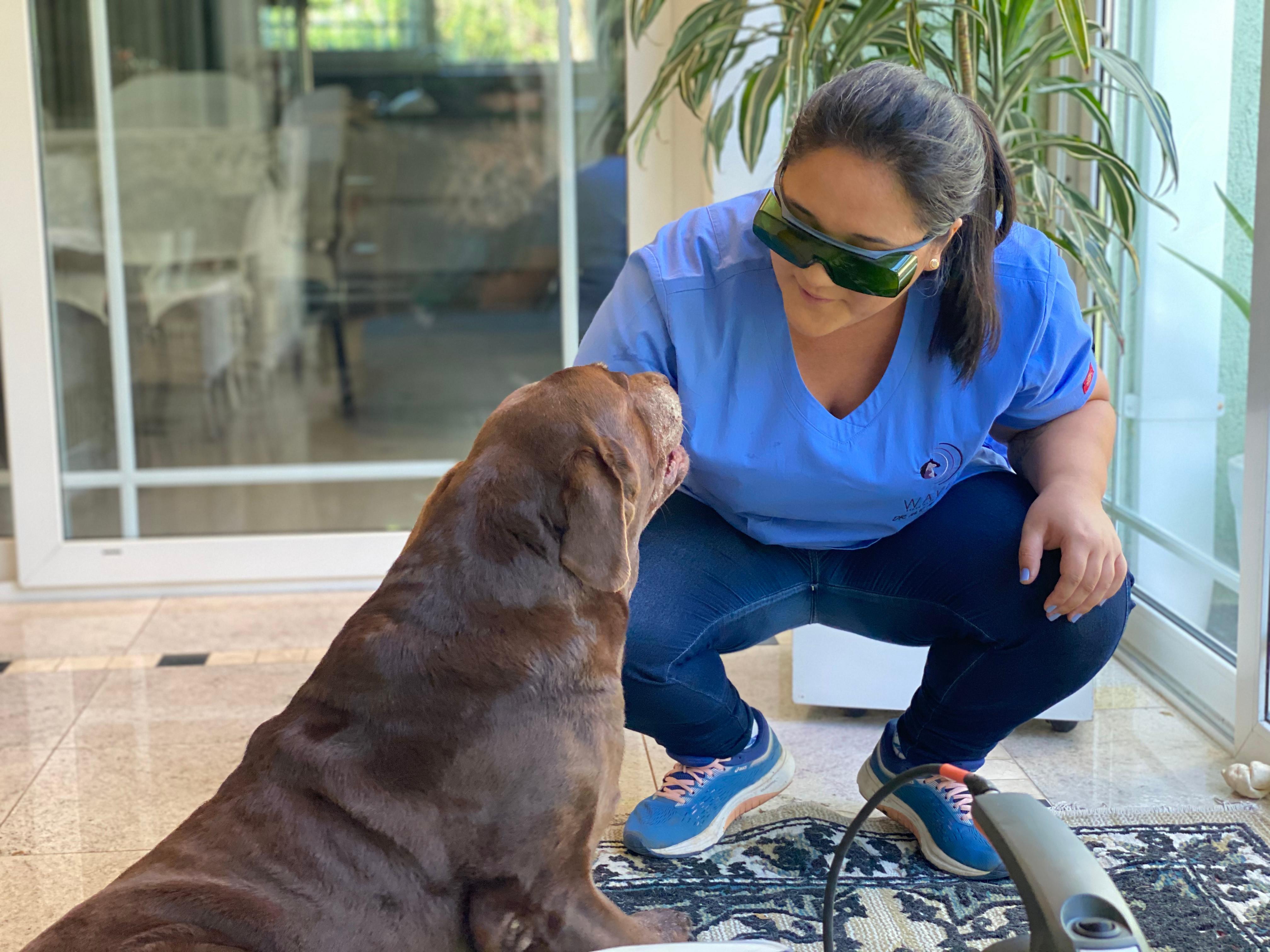 Exames de bem-estar do animal de estimação