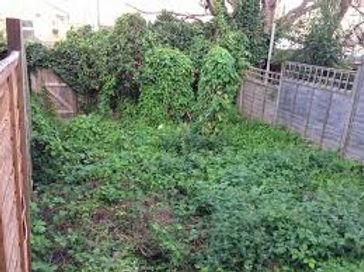 gardenmess.jpg