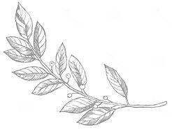 ejemplo-del-vector-grabado-de-la-rama-la