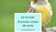 Les trois vérités du serin (métaphore)