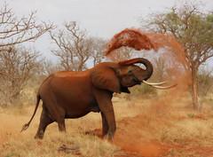 Les 6 aveugles et l'éléphant (métaphore)