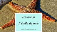 L'étoile de mer (métaphore)