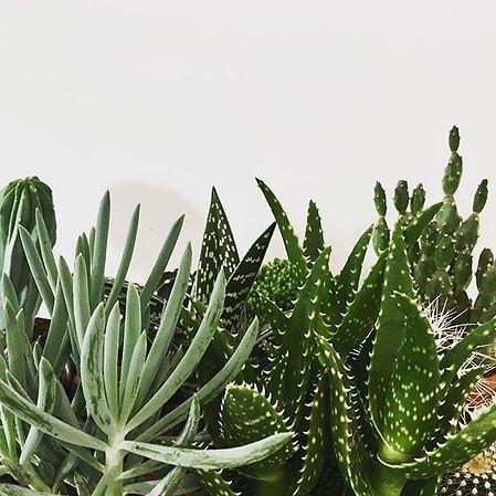 Cactus paradise 🌵