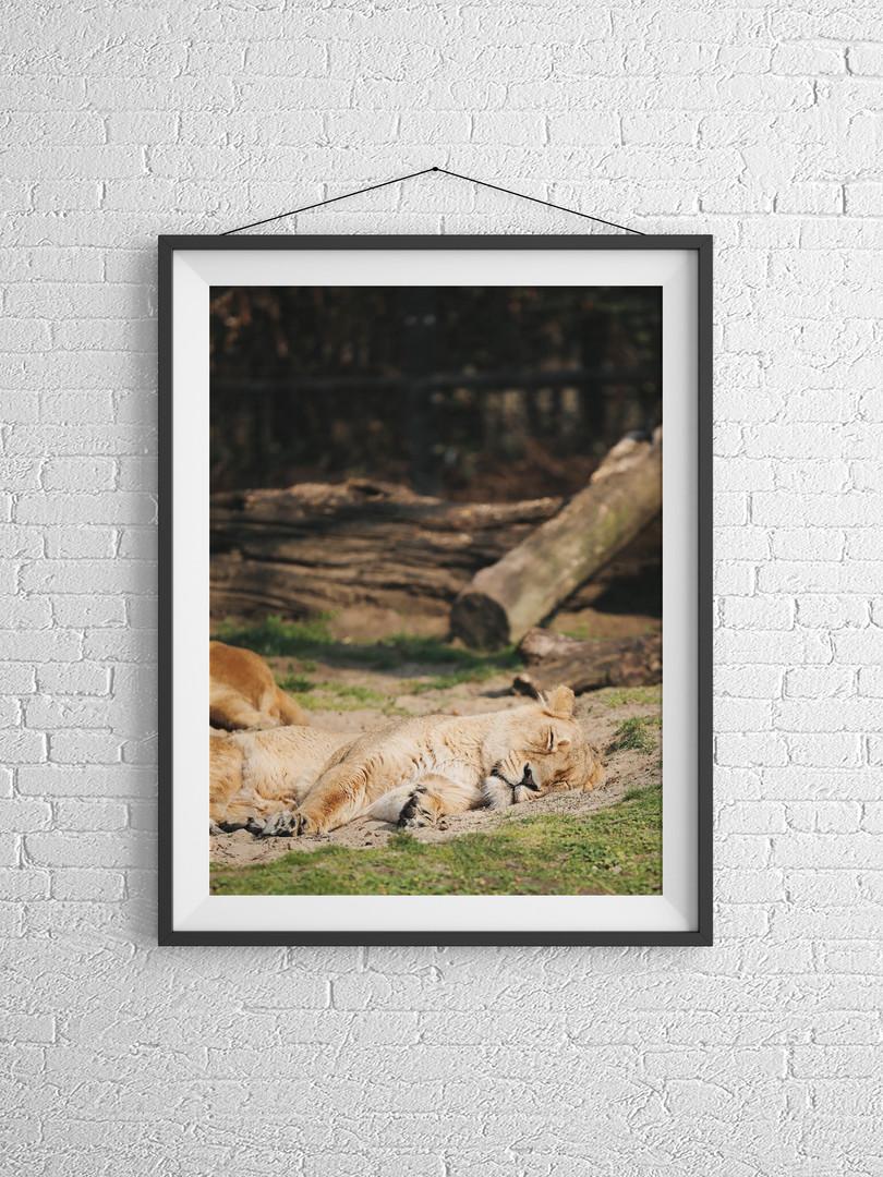 POSTER leeuw.jpg