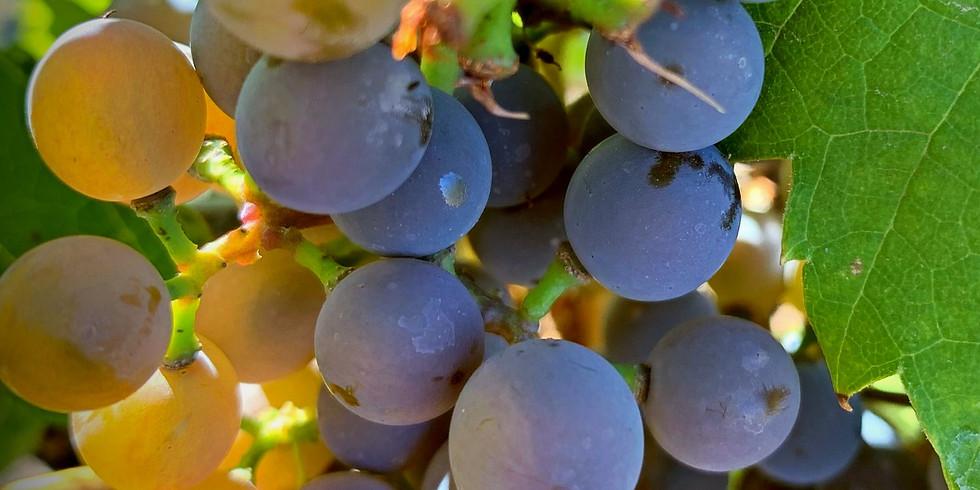 Priase in the Vineyard