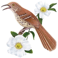 GA State Bird & Flower_transparent.png