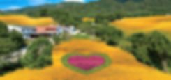 金針花海-2.jpg