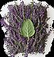 aveda lavender.png