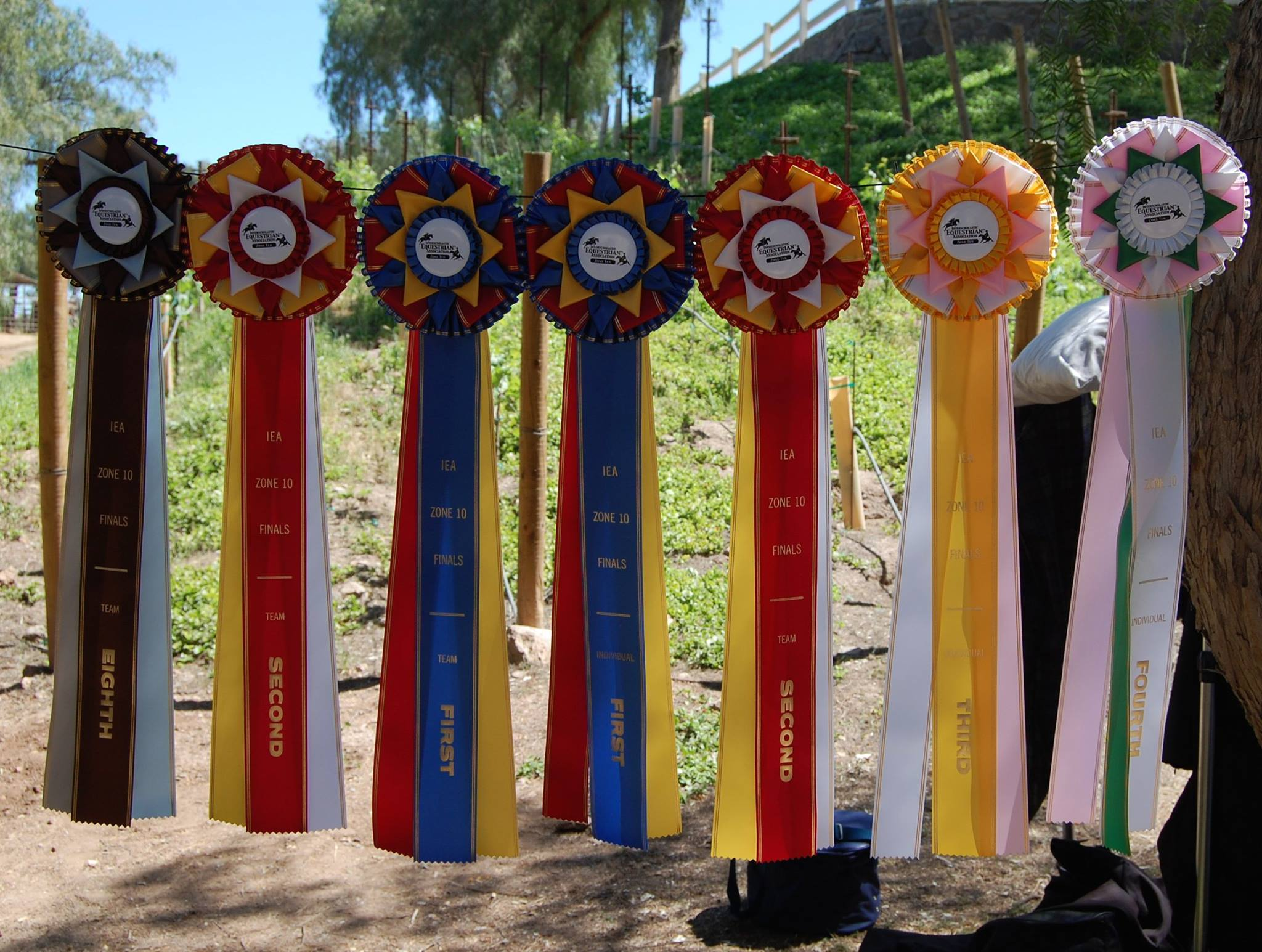 TBS IEA Champion Ribbons