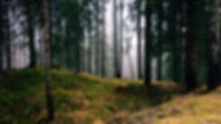 Here I Am Background.jpg