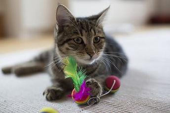 SHIMMER Pet Sitting - Cats.jpg