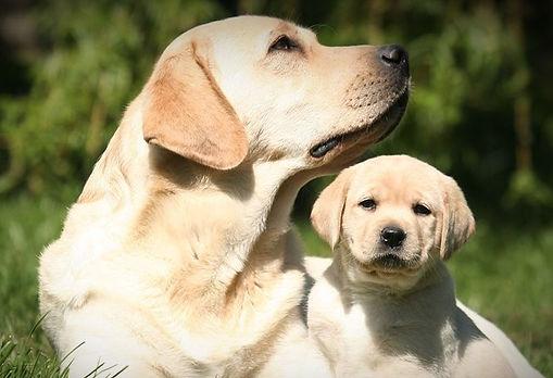 introducing-puppy-to-older-dog-header_ed