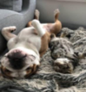 Shimmer Pet Care - Lots of lov