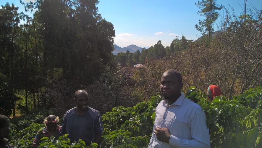 John Mulangeni sporting his Ngoni headgear follows the farmer into the coffee garden