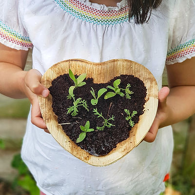 Seedlings Heart Seeds.jpg