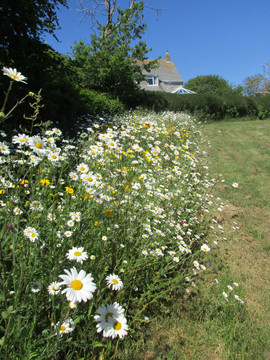 Begbie Wildflower Meadow 2020 11.jpg