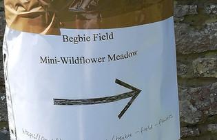 Begbie Wildflower Meadow 2019 24.jpg