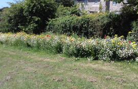 Begbie Wildflower Meadow 2019 22.jpg