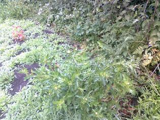 Begbie Wildflower Meadow 2019 13.jpg
