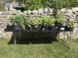 104 Plants.jpeg
