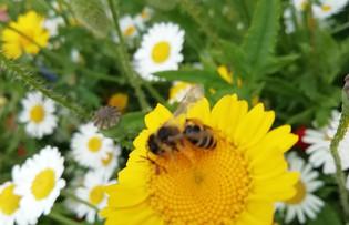 Begbie Wildflower Meadow 2019 25.jpg