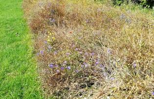 Begbie Wildflower Meadow 2019 31.jpg