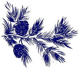 depositphotos_56953631-stock-photo-pine-