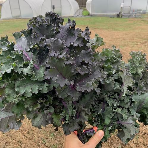Kale- Redbor