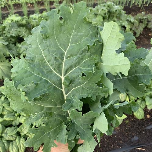 Kale - White Russian