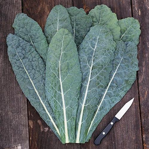 Kale - Lacinato/Tuscan/Dino