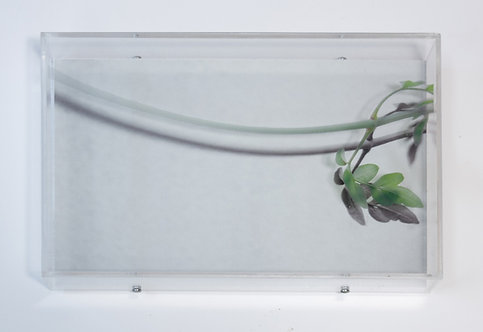 mixed media plant artwork Nikoletta Papakonstantinou original art