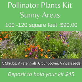 Poll_Plants_Sun_Final.jpg