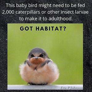 BabyBird-Habitat.jpg