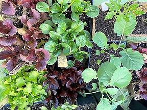 Garden_Veg1.jpg