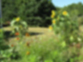 0-Pollinator_gard_8-26-19.jpg
