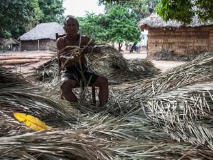 preparando a palha de buriri para a cobertura das casas