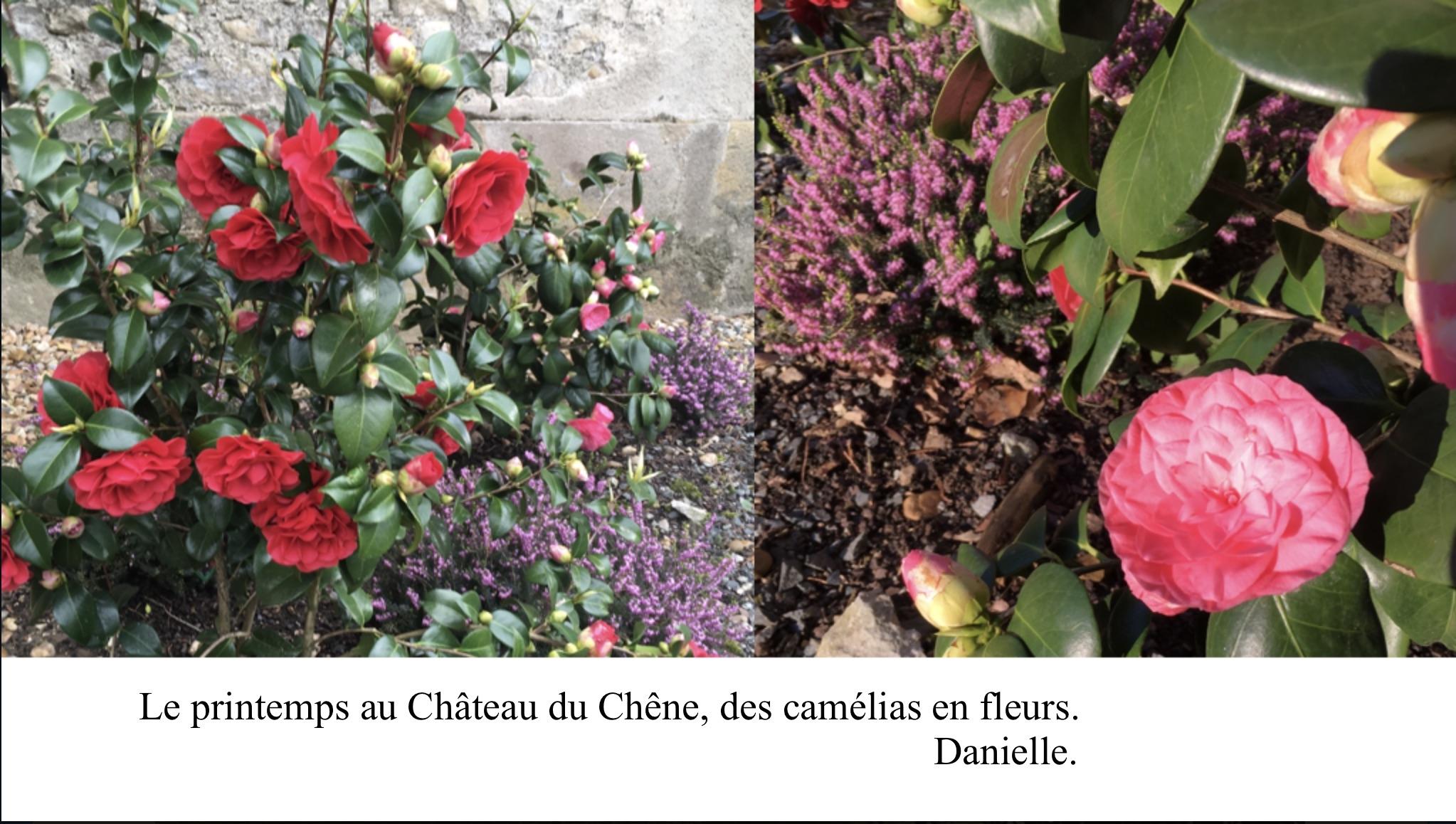 Floraison au Château